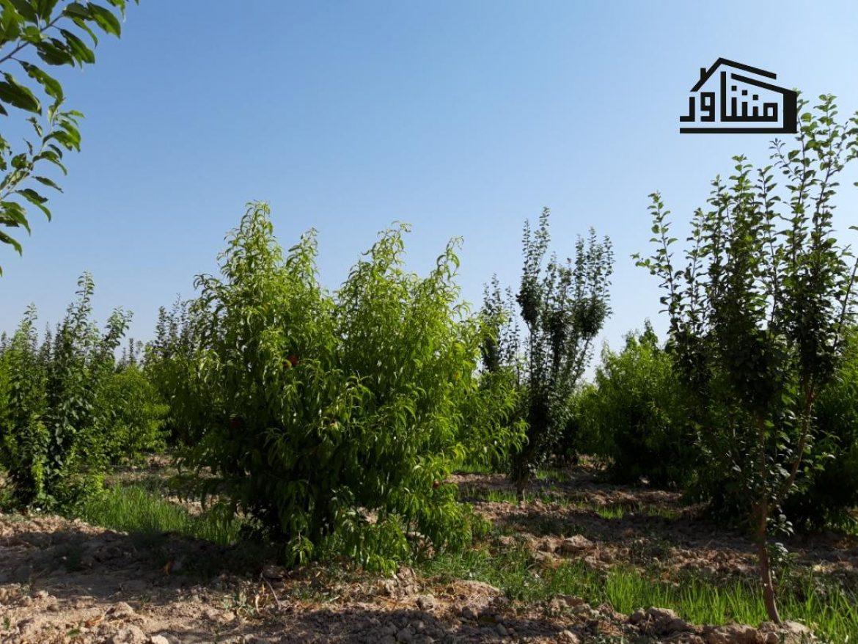 باغ فروشی ملارد شهریار